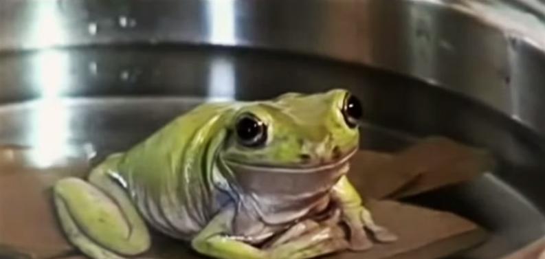 Syndrom gotowanej żaby